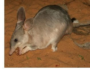 Australian Sustainability Calendar - September 2014 - rat eating